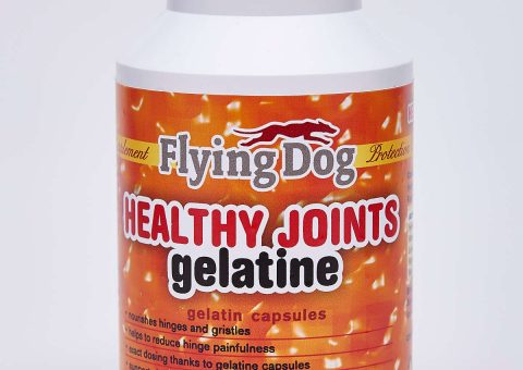 gelatine-flying-dog